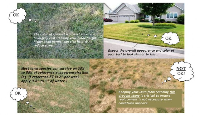 Drought Proof Your Lawn